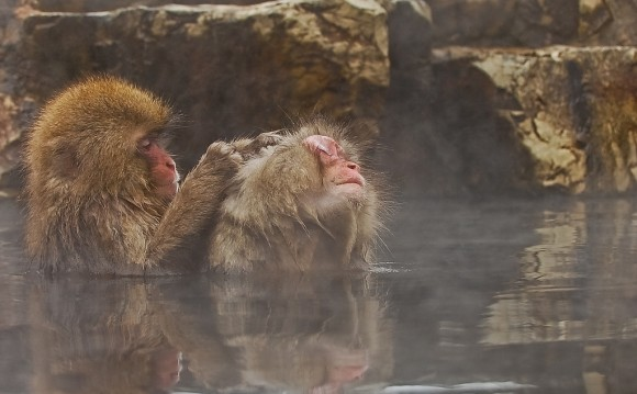 japanese-macaque-winter-09