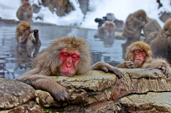 japanese-macaque-winter-14