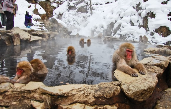 japanese-macaque-winter-20
