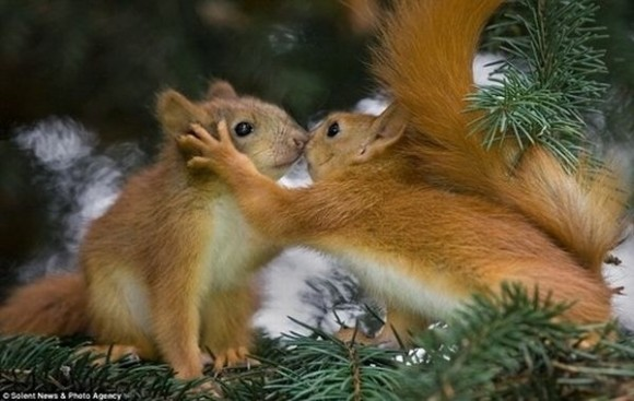kissing-cute-animals-01