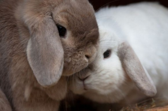 kissing-cute-animals-06
