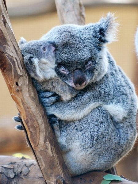 kissing-cute-animals-11