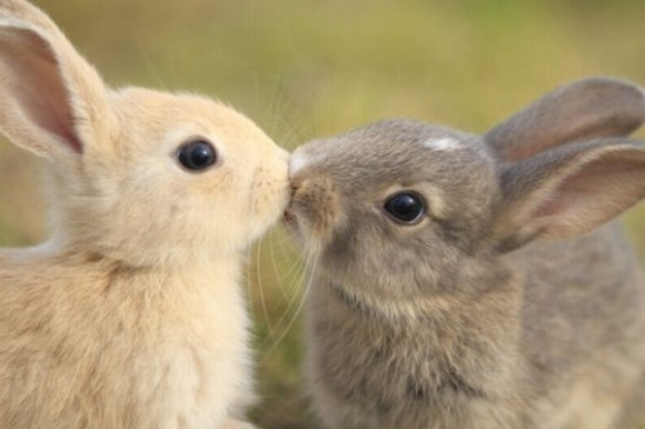 kissing-cute-animals-12