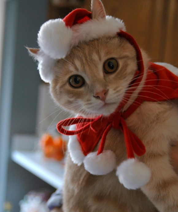 santa-costume-cat