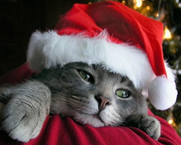 santa-costume-cats-01