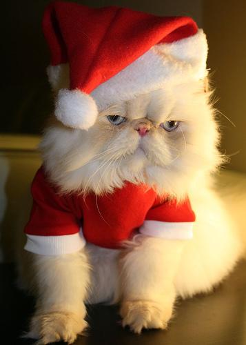 santa-costume-cats-02