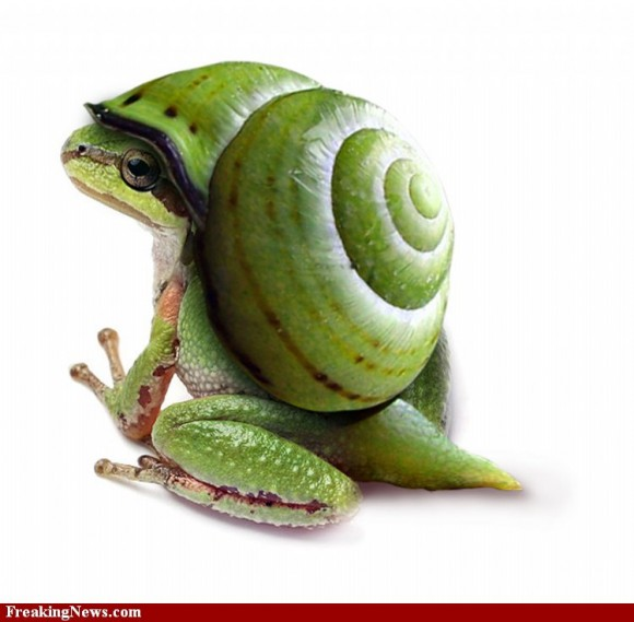snail-frog