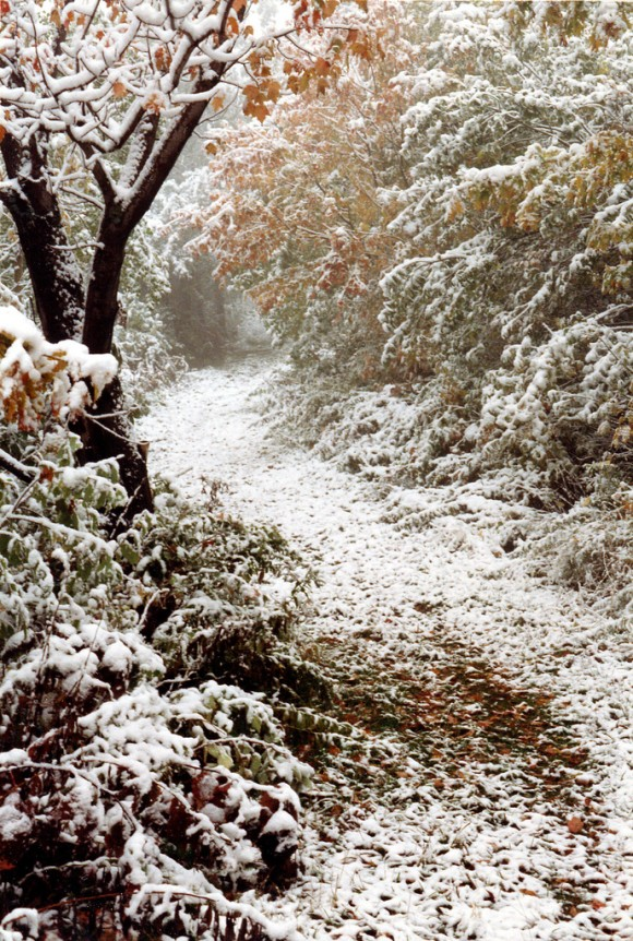 snow-day-19