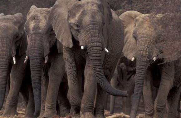 大自然の中での動物大移動