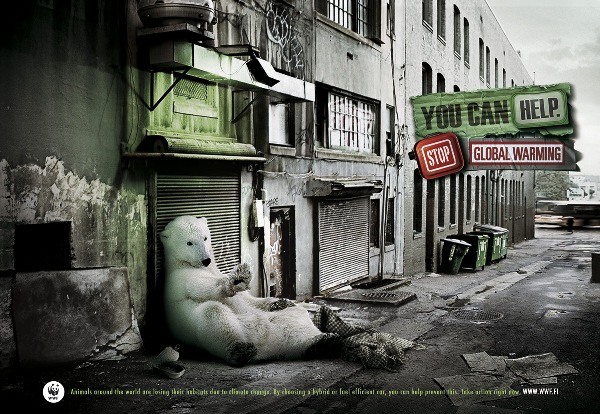 wwf-homeless-polar-bear