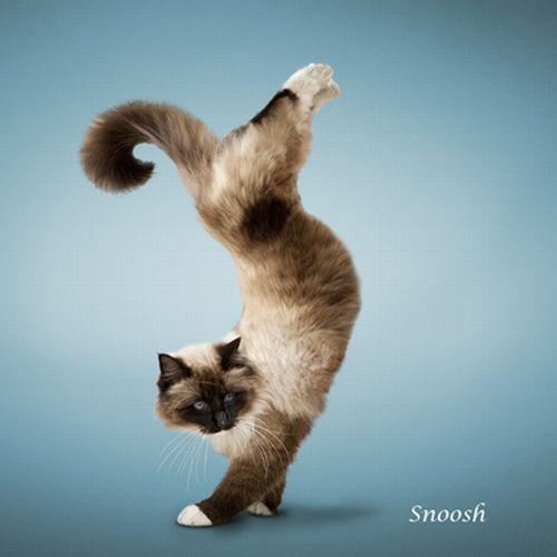 yoga-cat-05