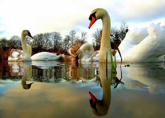 5x2-swans-10