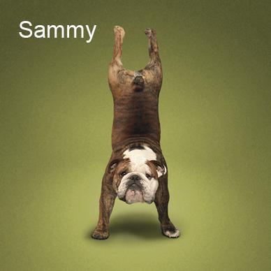 Yoga_dogs1