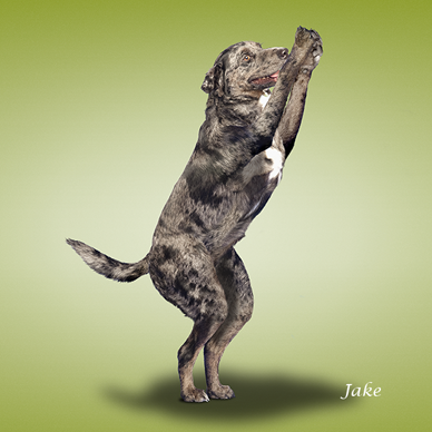 Yoga_dogs20