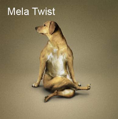Yoga_dogs6