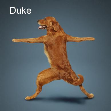 Yoga_dogs7