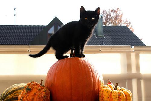 黒猫とジャックランタン