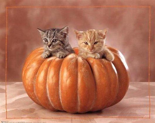 子猫とジャックランタン