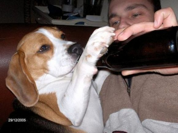 drunk-animal-pictures-11