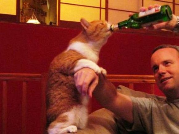 drunk-animal-pictures-12