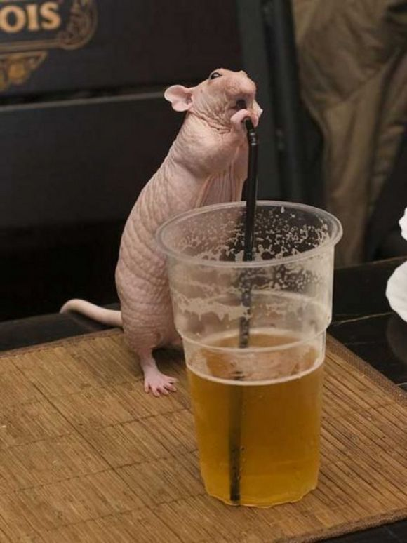 drunk-animal-pictures-17