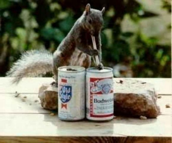 drunk-animal-pictures-19