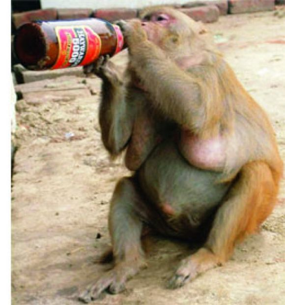drunk-animal-pictures-23