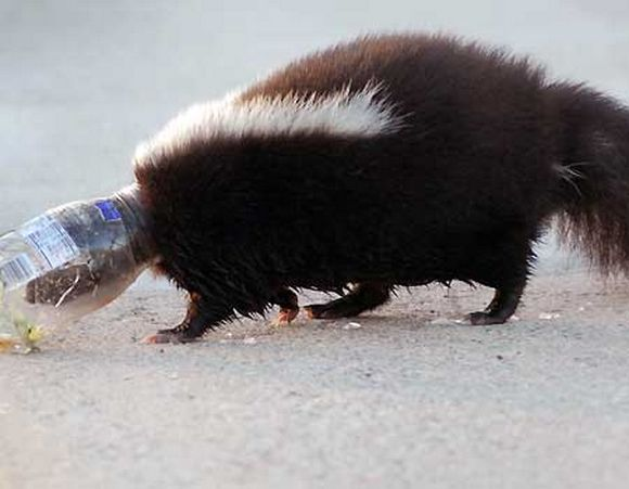 drunk-animal-pictures-24