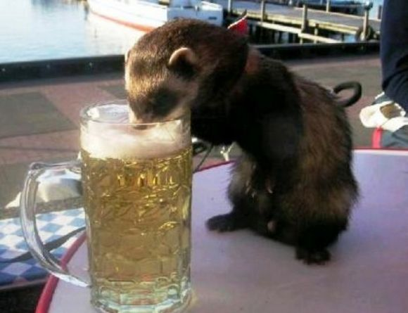 drunk-animal-pictures-30
