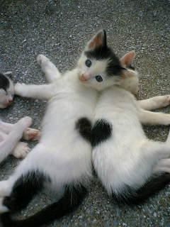 2匹の子猫の毛並み模様