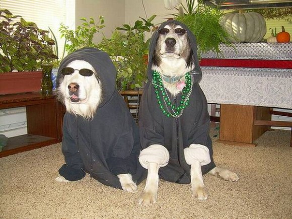 gangster-dogs-04