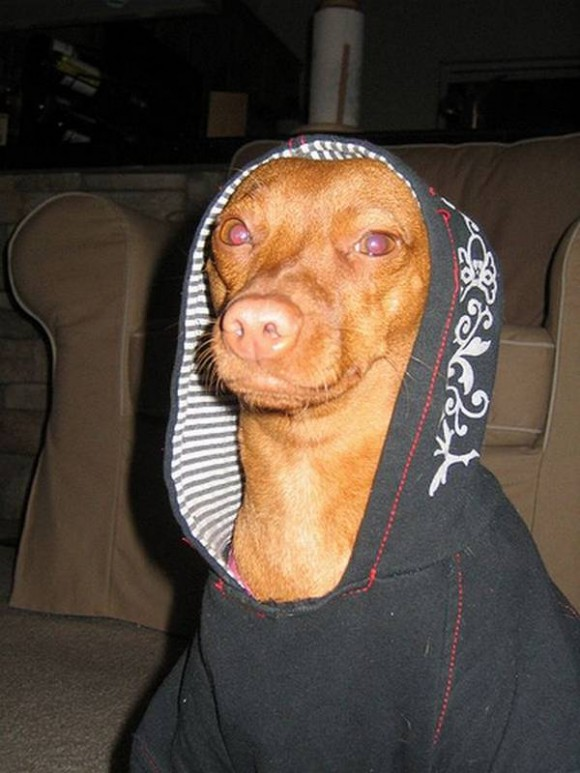 gangster-dogs-05