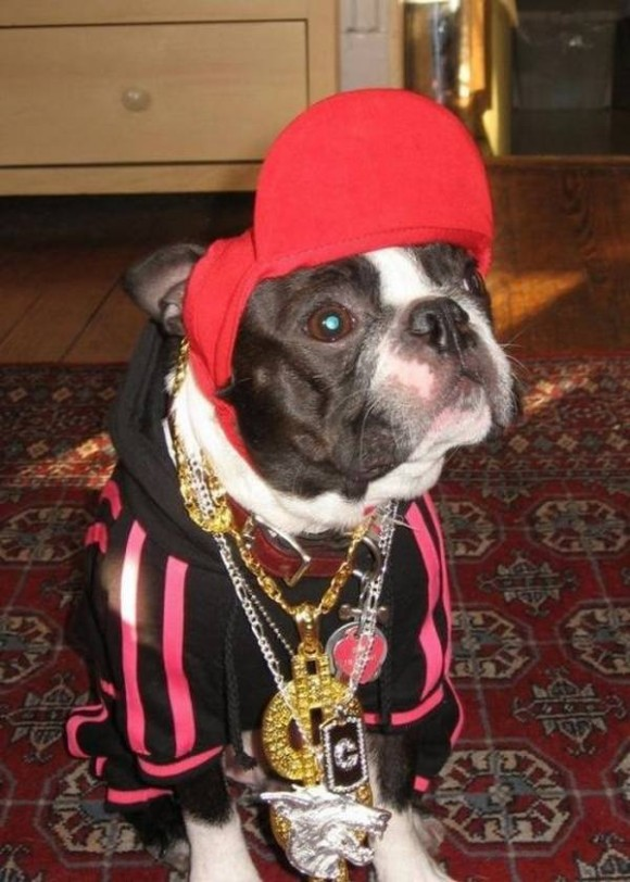 gangster-dogs-09