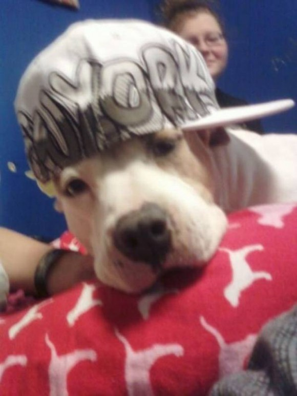 gangster-dogs-12