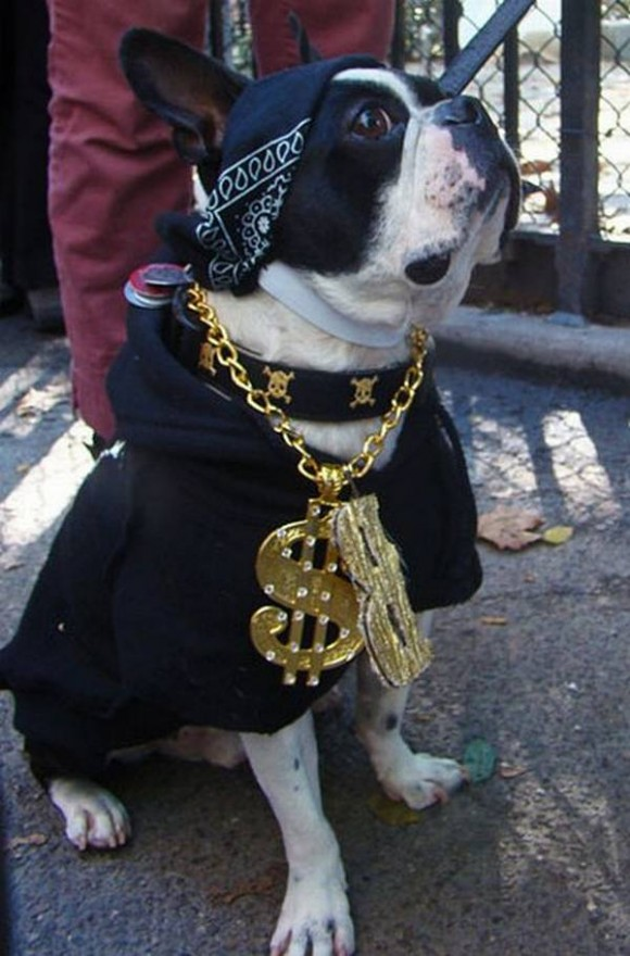 gangster-dogs-15