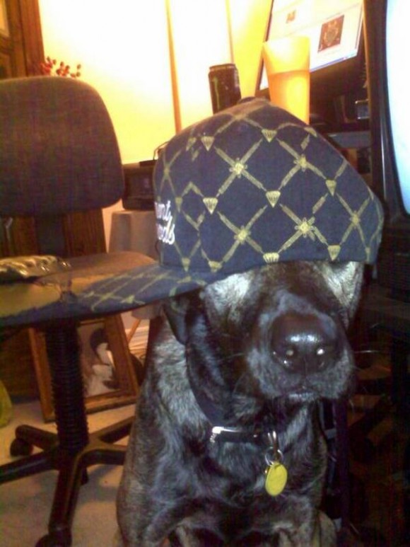 gangster-dogs-16