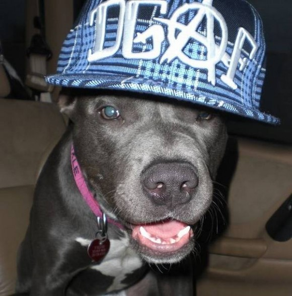 gangster-dogs-17