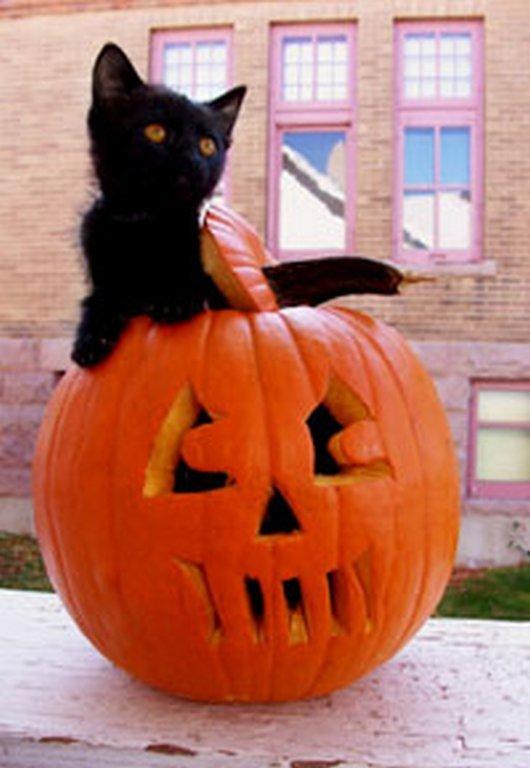 黒猫とハロウィン