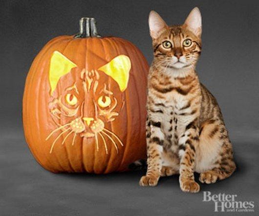 ジャックランタンと同じ顔の猫