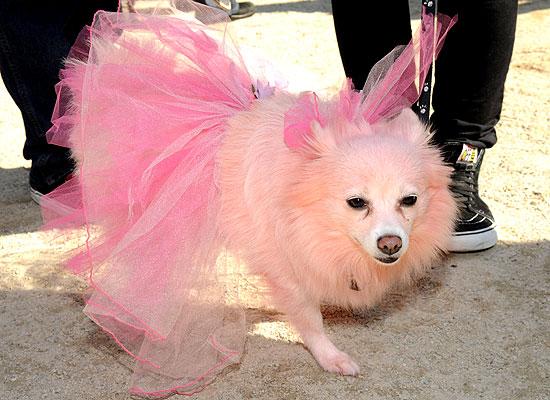 halloween-doggy-costume-best-09