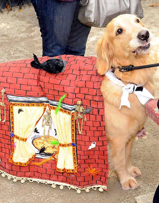 halloween-doggy-costume-best-11