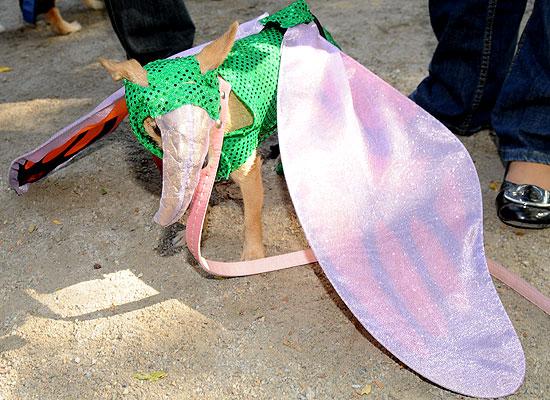 halloween-doggy-costume-best-12