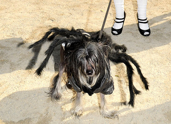 halloween-doggy-costume-best-21