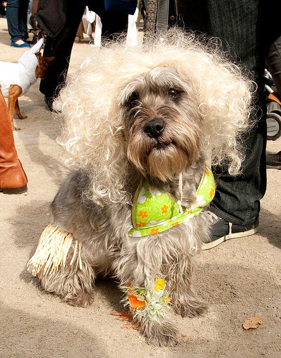 halloween-doggy-costume-best-29