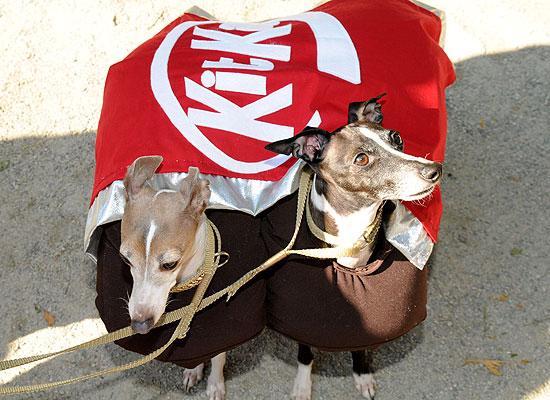 halloween-doggy-costume-best-39
