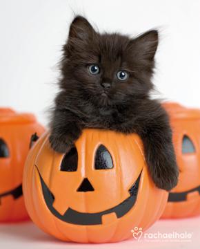 黒い子猫とかぼちゃ