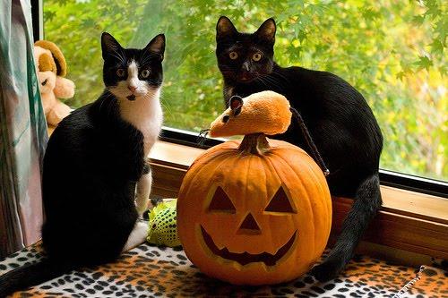 かぼちゃと2匹の猫