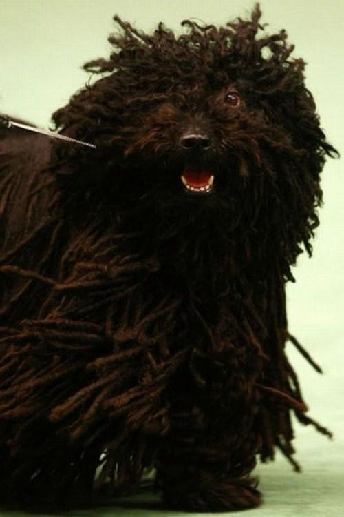 hilarious-dog-haircuts-5