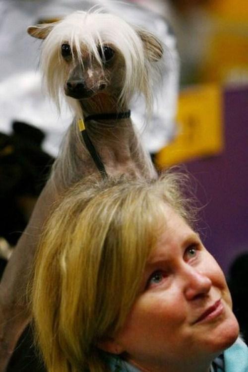 hilarious-dog-haircuts-9
