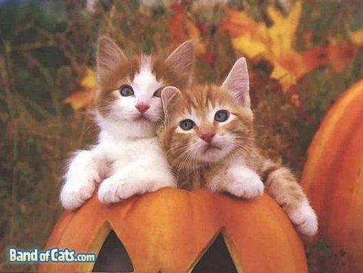 かぼちゃと子猫2匹